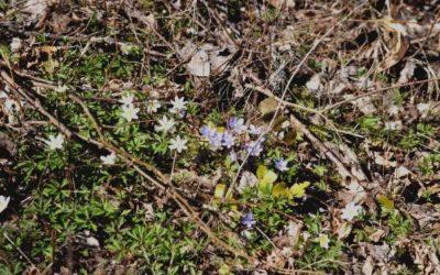 Våren har kommit.